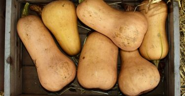 butternut-cuisiner le butternut-doubeurre-healthy